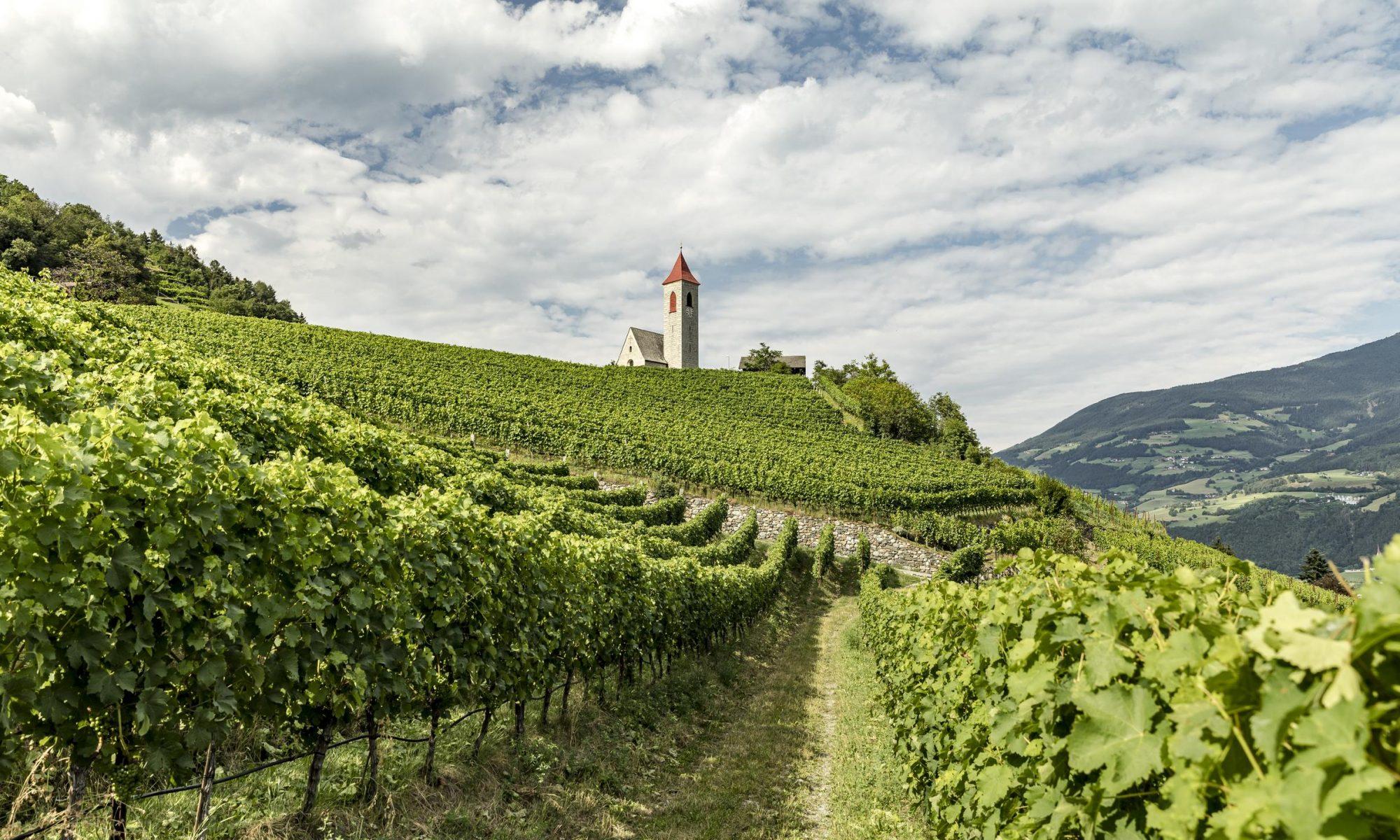 IDM/Südtirol Wein/Tiberio Sorvillo